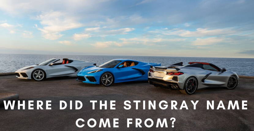 Where Did the Stingray Name Come From?